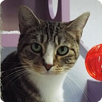 Adopt A Pet :: Moesha - Grants Pass, OR