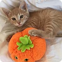 Adopt A Pet :: Alex - Harrison, NY