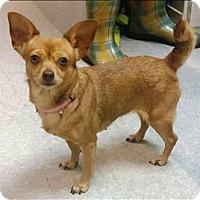 Adopt A Pet :: Baby Girl - Atlantic City, NJ