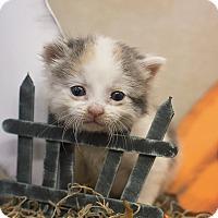 Adopt A Pet :: Samantha - Sterling, KS