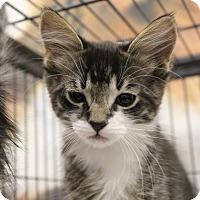 Adopt A Pet :: Bisby - Sarasota, FL