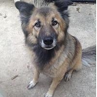 Adopt A Pet :: Roxxie - San Antonio, TX