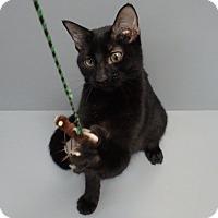 Adopt A Pet :: Tuffy - Seguin, TX