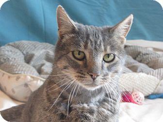 Domestic Shorthair Cat for adoption in Ridgway, Colorado - Ben