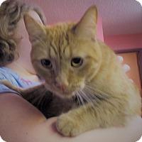 Adopt A Pet :: Archie - Reeds Spring, MO