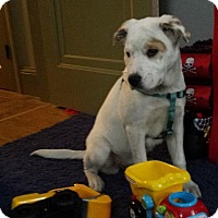 Adopt A Pet :: Christmas - Boston, MA