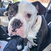 Adopt A Pet :: Kane - Suwanee, GA