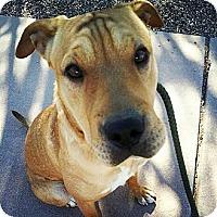 Adopt A Pet :: Daphnee - Scottsdale, AZ