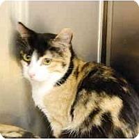 Adopt A Pet :: Cutie - Modesto, CA