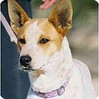 Adopt A Pet :: Val - Phoenix, AZ