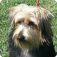 Adopt A Pet :: Reece - Brattleboro, VT
