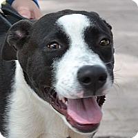 Adopt A Pet :: Lulubelle - Gilbert, AZ