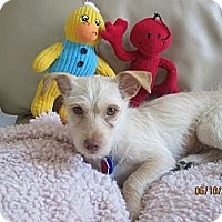 Adopt A Pet :: Tabitha - Culver City, CA