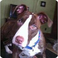 Adopt A Pet :: Etta - Rochester, NY
