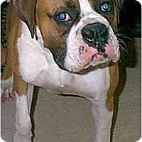 Adopt A Pet :: Jock - dewey, AZ