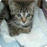 Adopt A Pet :: Brooks - Island Park, NY