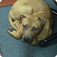 Adopt A Pet :: Zeus - Garwood, NJ