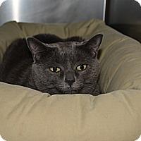 Adopt A Pet :: Jenny - Bay Shore, NY