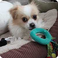 Adopt A Pet :: Teddy - Bend, OR