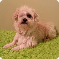 Adopt A Pet :: Boone - Russellville, KY