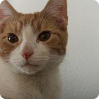 Adopt A Pet :: Harvey - Fairborn, OH