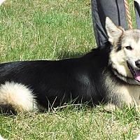 Adopt A Pet :: Lenore - Lebanon, CT