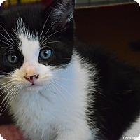Adopt A Pet :: Robby - Island Park, NY