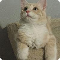 Adopt A Pet :: Donovan - Chandler, AZ
