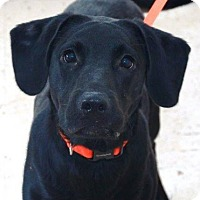 Adopt A Pet :: Hildee - Rexford, NY