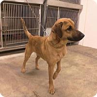 Adopt A Pet :: TANK - Upper Sandusky, OH