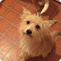 Adopt A Pet :: Waldo - Westport, CT