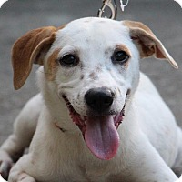 Adopt A Pet :: Lucia - San Francisco, CA