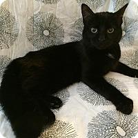 Adopt A Pet :: Bittersweet - Addison, IL