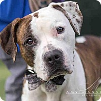 Adopt A Pet :: KINGSTON A1693970 is in danger at San Diego Shelt - Beverly Hills, CA