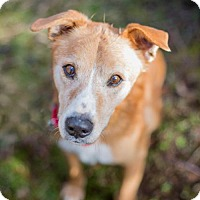 Adopt A Pet :: Mack - Portland, OR