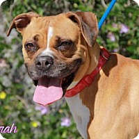 Boxer Dog for adoption in Los Angeles, California - Sarah