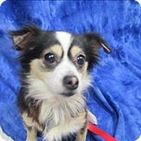 Adopt A Pet :: Emma - Portland, OR
