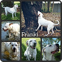 Adopt A Pet :: Franki - Miami, FL