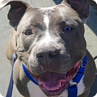 Adopt A Pet :: Mellow - Reisterstown, MD