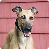 Adopt A Pet :: Jake - Ware, MA