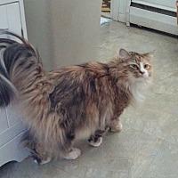 Adopt A Pet :: WILLOW - Maybrook, NY