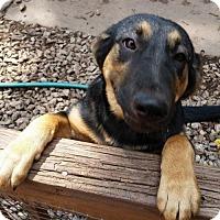 Adopt A Pet :: Diva - Temple, GA