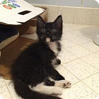 Adopt A Pet :: *KRAMER - Sacramento, CA