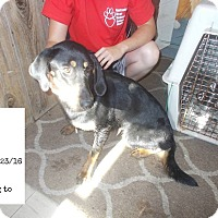 Adopt A Pet :: Penny*FOSTER NEEDED!* - Chicago, IL