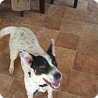 Adopt A Pet :: Babs - Pataskala, OH