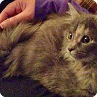 Adopt A Pet :: Honey - Potomac, MD
