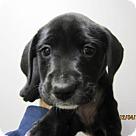 Adopt A Pet :: Baby Butter