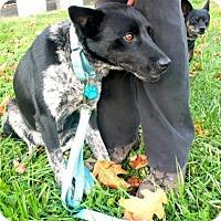 Adopt A Pet :: Kat - Sparta, NJ