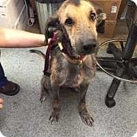 Adopt A Pet :: Samson - Eighty Four, PA
