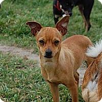 Adopt A Pet :: Tootsie - Kempner, TX